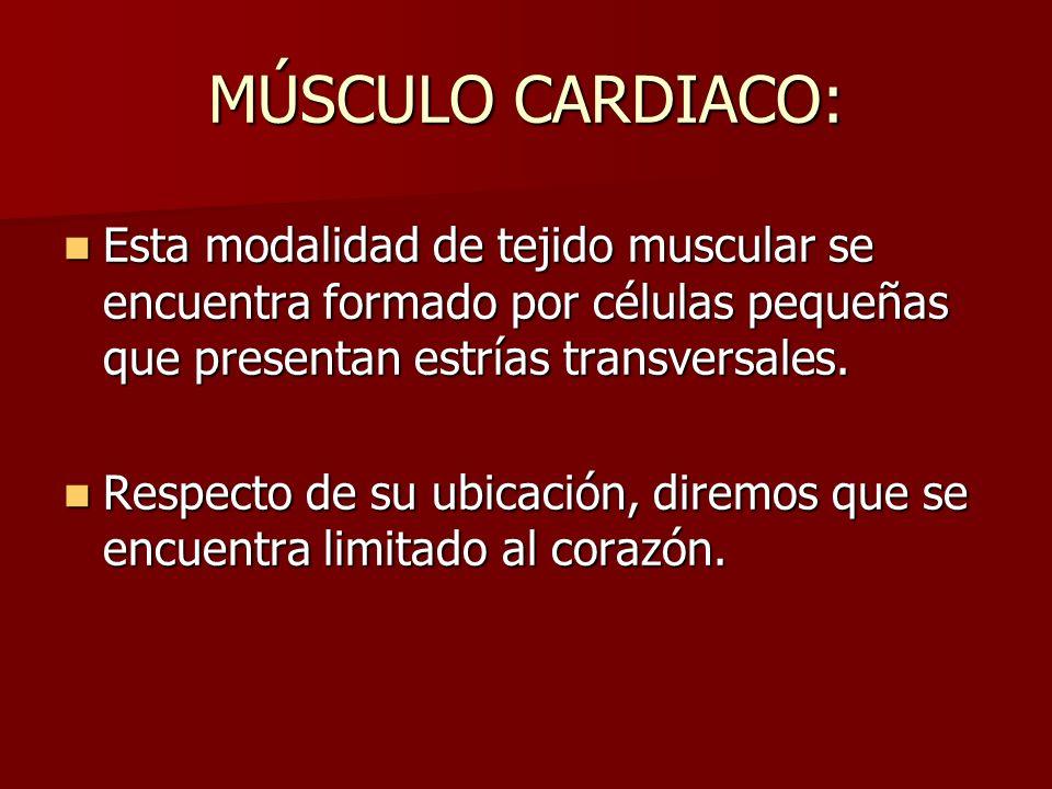 MÚSCULO CARDIACO: Esta modalidad de tejido muscular se encuentra formado por células pequeñas que presentan estrías transversales. Esta modalidad de t