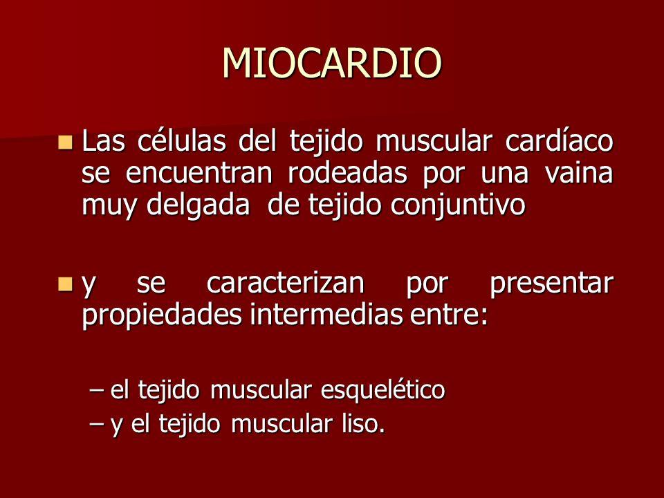 Las células del tejido muscular cardíaco se encuentran rodeadas por una vaina muy delgada de tejido conjuntivo Las células del tejido muscular cardíac