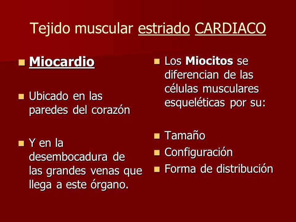 Tejido muscular estriado CARDIACO Miocardio Miocardio Ubicado en las paredes del corazón Ubicado en las paredes del corazón Y en la desembocadura de l