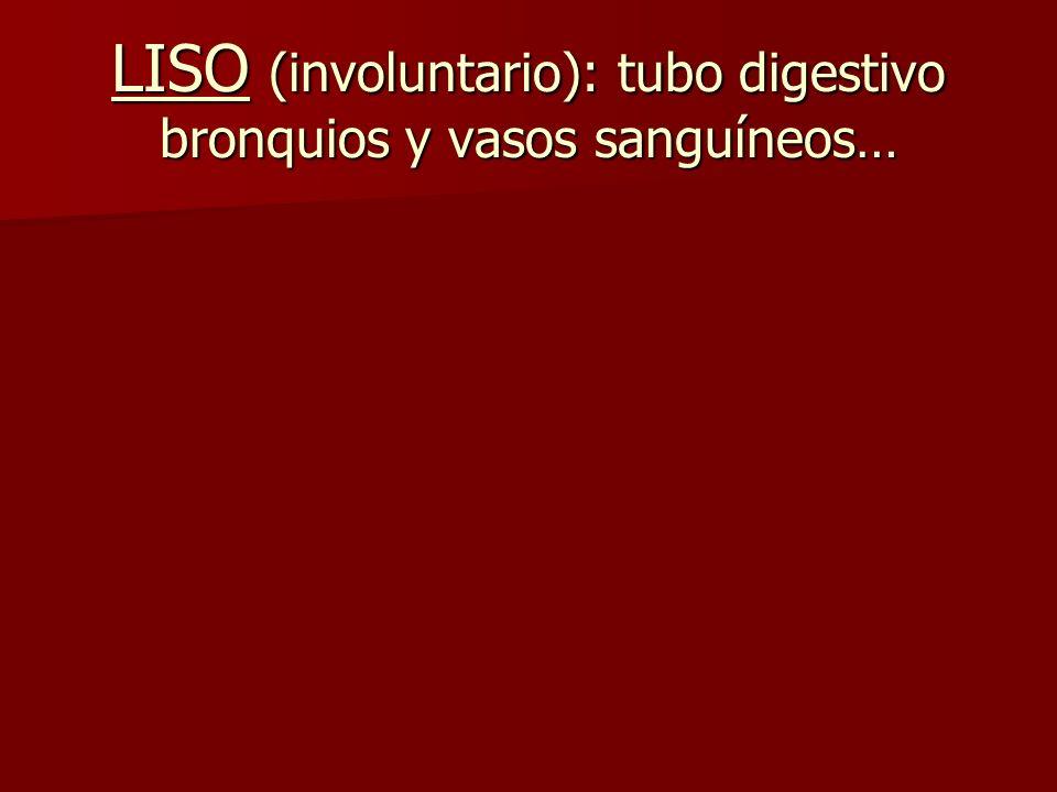LISO (involuntario): tubo digestivo bronquios y vasos sanguíneos…