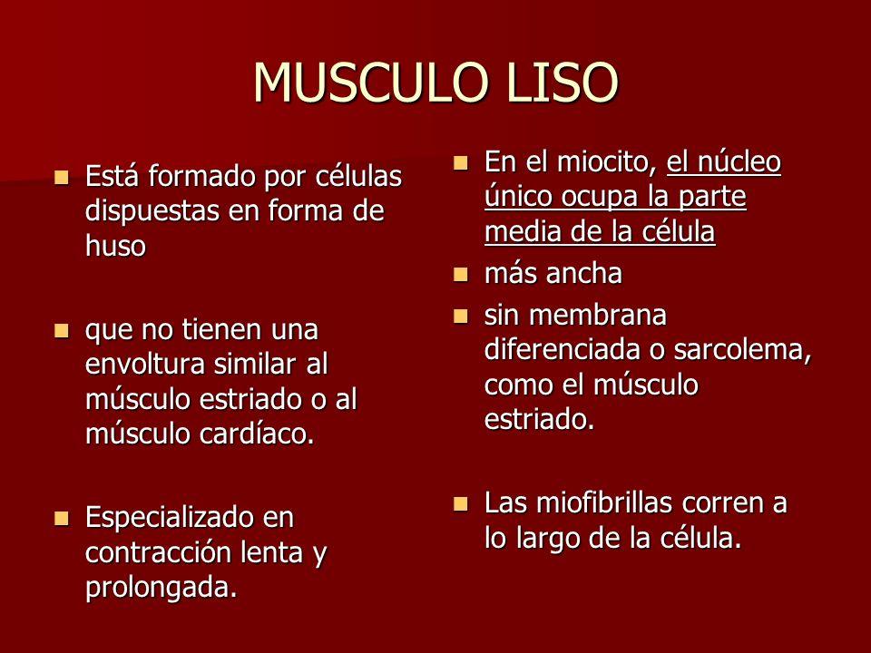 MUSCULO LISO Está formado por células dispuestas en forma de huso Está formado por células dispuestas en forma de huso que no tienen una envoltura sim