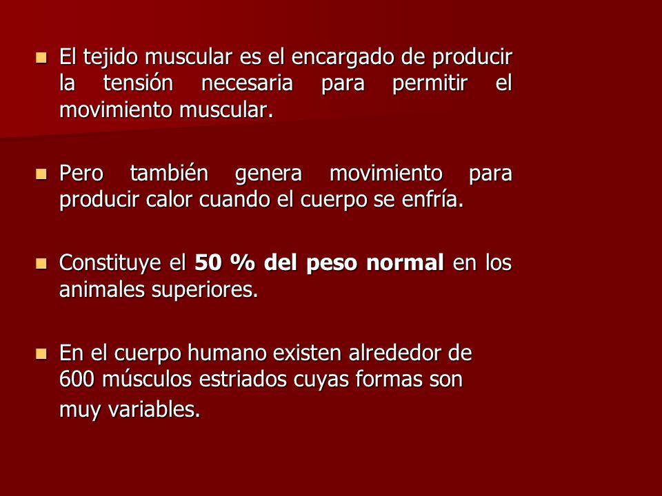 El tejido muscular es el encargado de producir la tensión necesaria para permitir el movimiento muscular. El tejido muscular es el encargado de produc