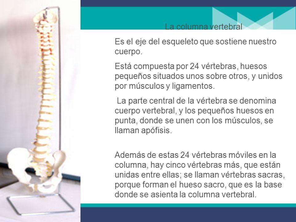 Es el eje del esqueleto que sostiene nuestro cuerpo.