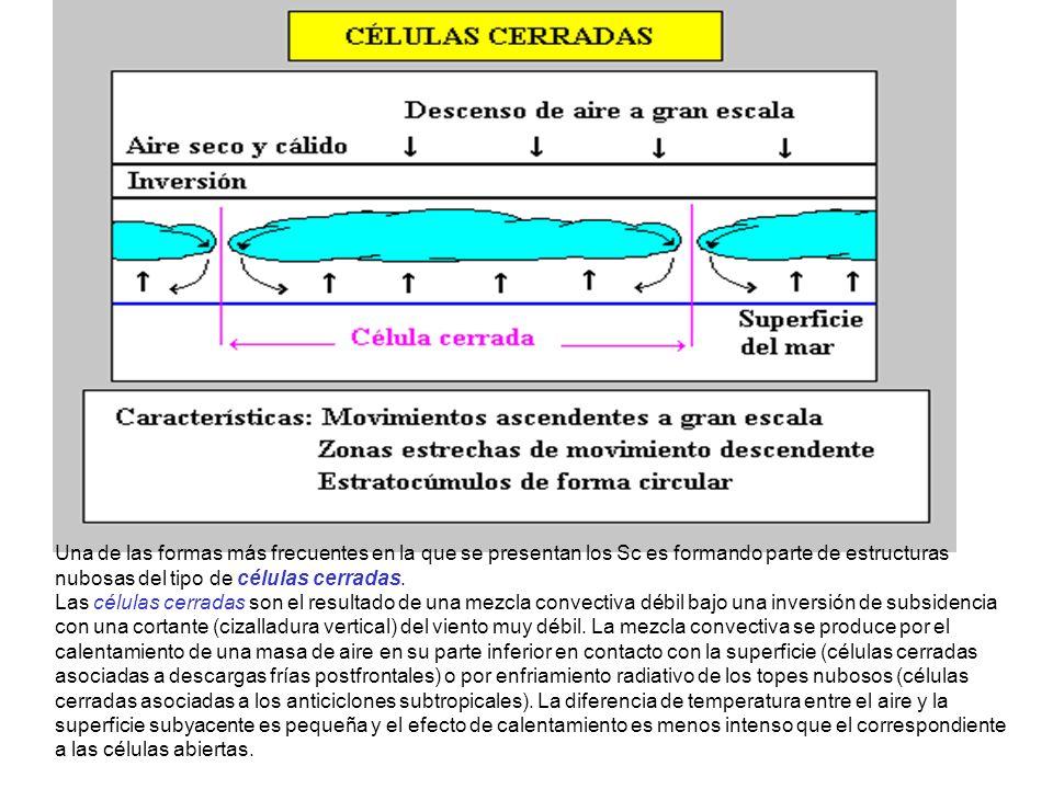 Una de las formas más frecuentes en la que se presentan los Sc es formando parte de estructuras nubosas del tipo de células cerradas. Las células cerr