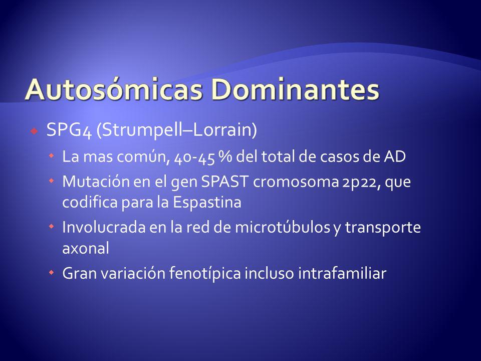 SPG4 (Strumpell–Lorrain) La mas común, 40-45 % del total de casos de AD Mutación en el gen SPAST cromosoma 2p22, que codifica para la Espastina Involucrada en la red de microtúbulos y transporte axonal Gran variación fenotípica incluso intrafamiliar