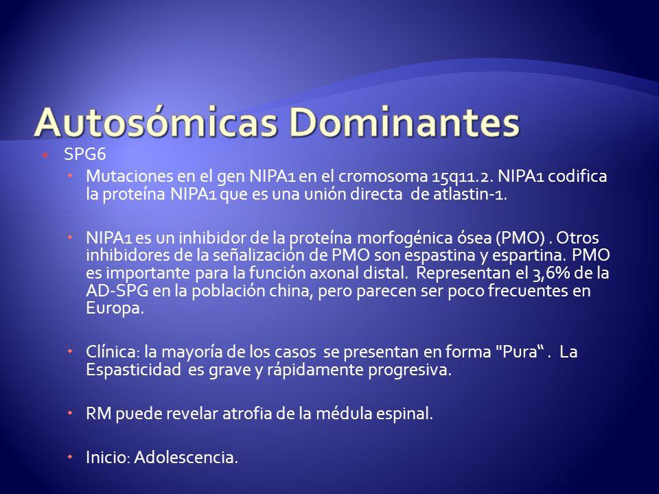 SPG6 Mutaciones en el gen NIPA1 en el cromosoma 15q11.2.