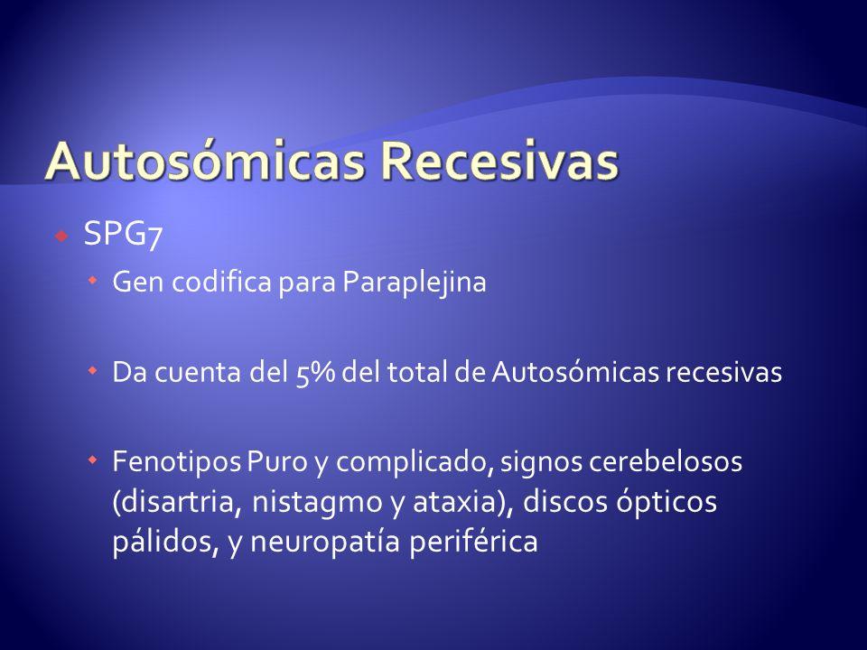 SPG7 Gen codifica para Paraplejina Da cuenta del 5% del total de Autosómicas recesivas Fenotipos Puro y complicado, signos cerebelosos (disartria, nistagmo y ataxia), discos ópticos pálidos, y neuropatía periférica