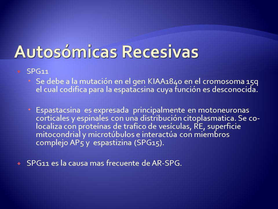SPG11 Se debe a la mutación en el gen KIAA1840 en el cromosoma 15q el cual codifica para la espatacsina cuya función es desconocida.