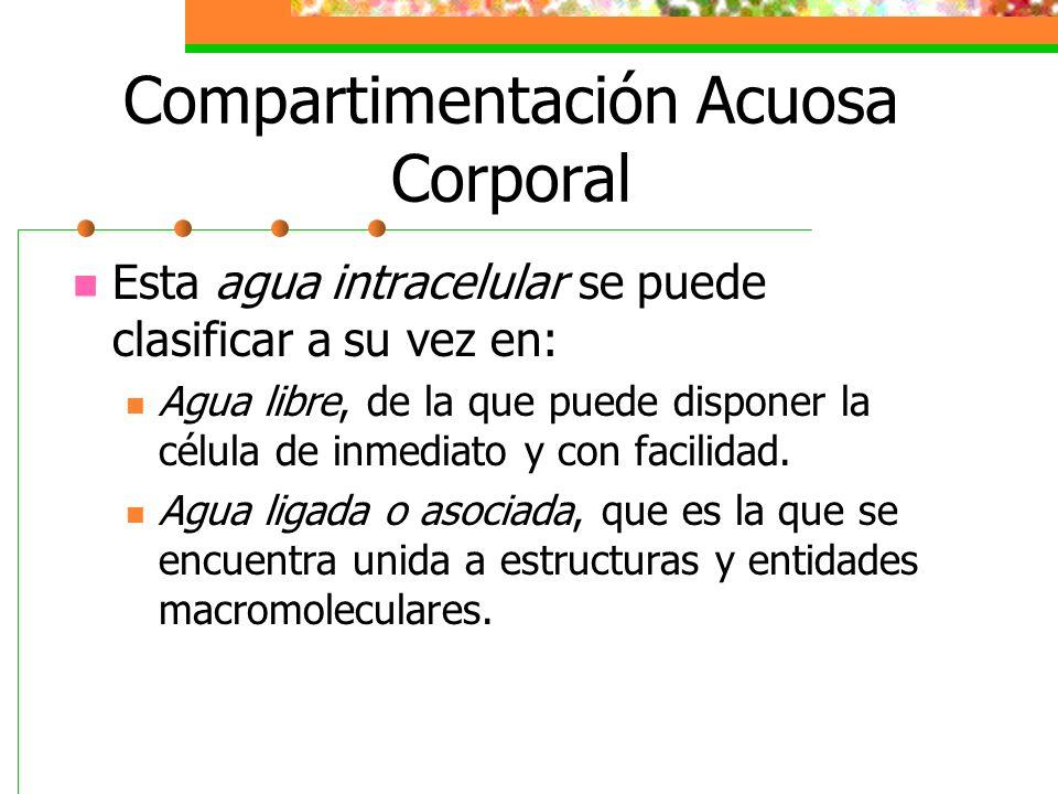 Compartimentación Acuosa Corporal Esta agua intracelular se puede clasificar a su vez en: Agua libre, de la que puede disponer la célula de inmediato