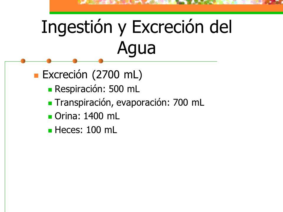 Ingestión y Excreción del Agua Excreción (2700 mL) Respiración: 500 mL Transpiración, evaporación: 700 mL Orina: 1400 mL Heces: 100 mL