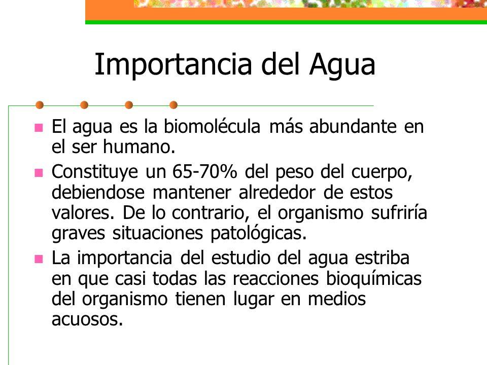 Funciones Bioquímicas y Fisiológicas del Agua El carácter termorregulador del agua permite conseguir un equilibrio de temp.