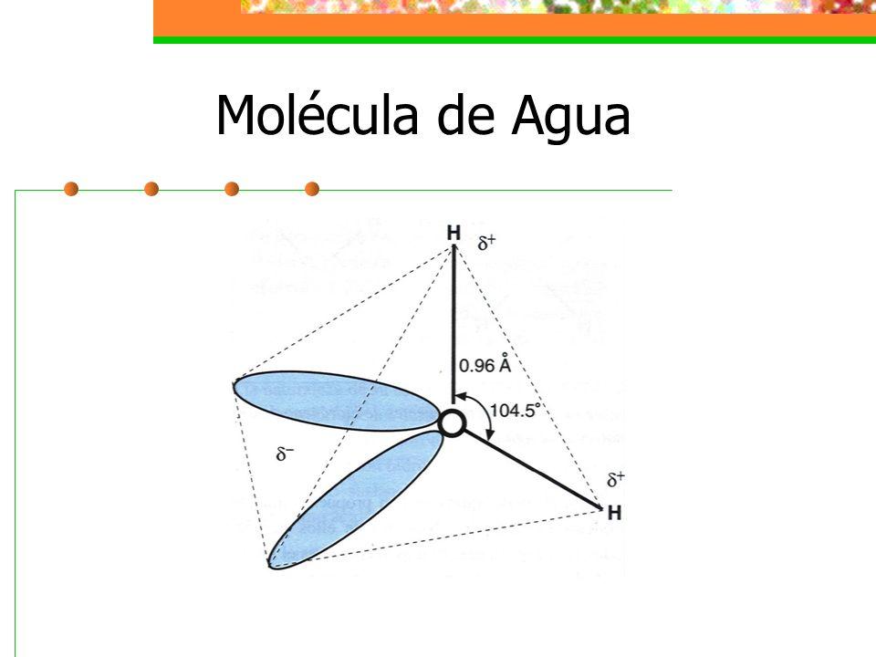 Puente de Hidrógeno Un enlace por puente de hidrógeno se efectúa entre un átomo electronegativo y el átomo de hidrogeno unido covalentemente a otro átomo electronegativo.