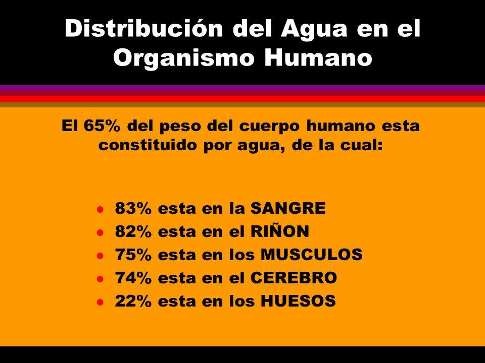 El Organismo Humano Necesita 2.6 a 2.8 litros de agua diariamente El ingresos de agua se realiza a través de: l Bebida: 52% l Alimentos: 48% l Inhalación: varia según condiciones climáticas (humedad relativa) Los egresos de agua se realizan por: l Orina: 60% l Transpiración: 20% l Exhalación: 16% l Defecación: 4%
