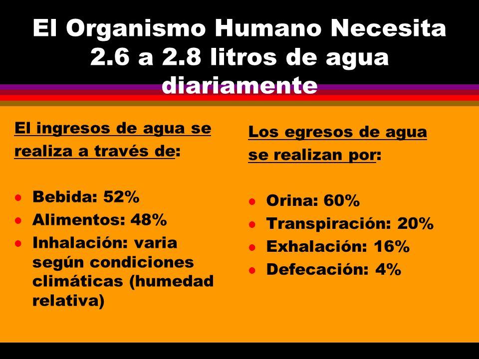 El Organismo Humano Necesita 2.6 a 2.8 litros de agua diariamente El ingresos de agua se realiza a través de: l Bebida: 52% l Alimentos: 48% l Inhalac