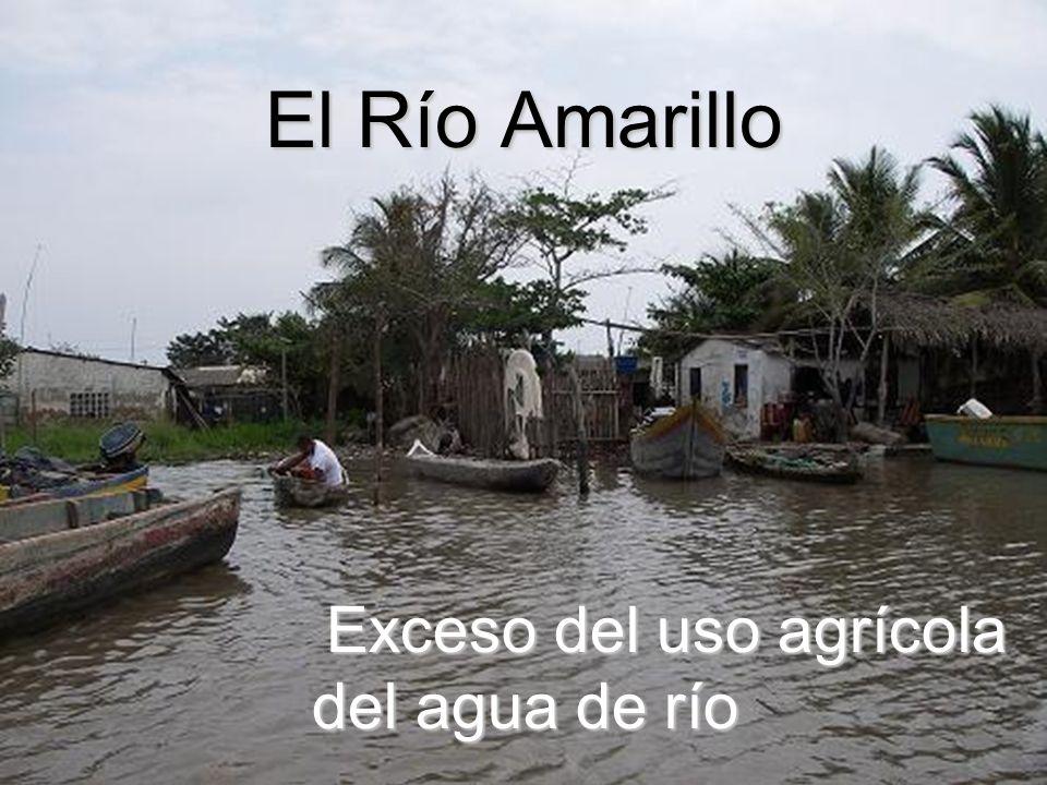 El Río Amarillo Exceso del uso agrícola del agua de río Exceso del uso agrícola del agua de río
