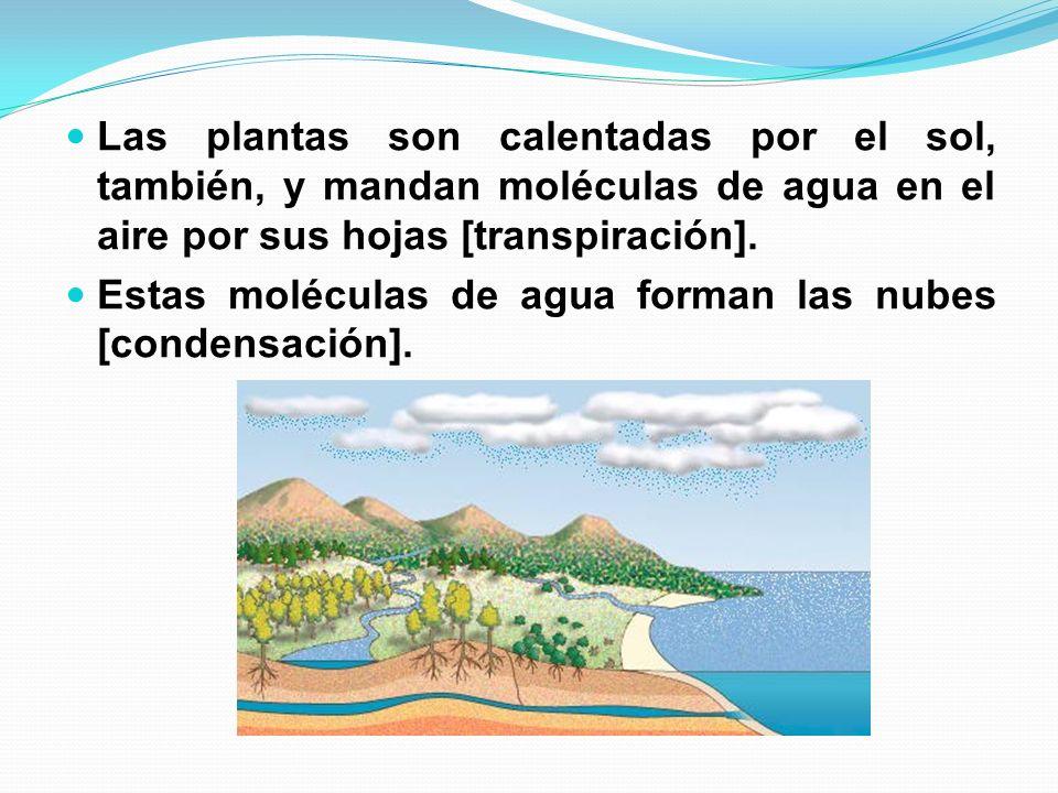 Cuando el aire y el agua refrescan, ellos forman gotas de agua que cae a la tierra como lluvia.