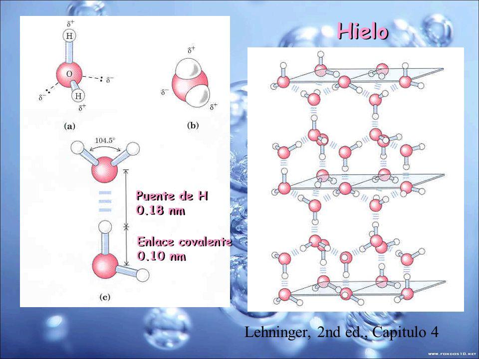 Lehninger, 2nd ed., Capitulo 4 Puente de H 0.18 nm Puente de H 0.18 nm Enlace covalente 0.10 nm Enlace covalente 0.10 nm Hielo