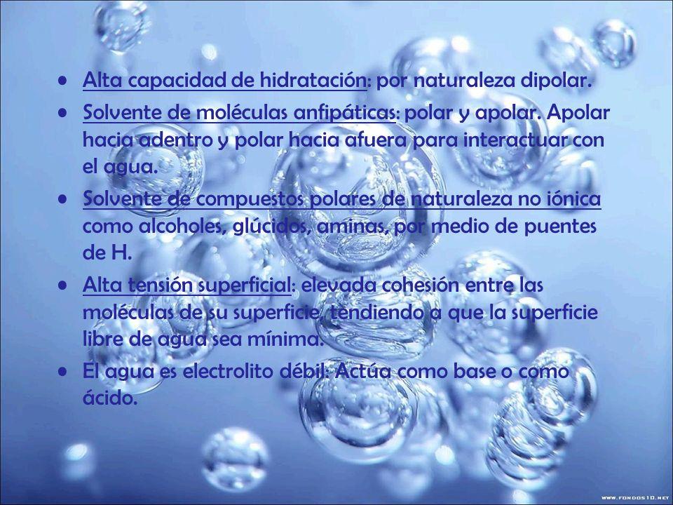 Alta capacidad de hidratación: por naturaleza dipolar. Solvente de moléculas anfipáticas: polar y apolar. Apolar hacia adentro y polar hacia afuera pa