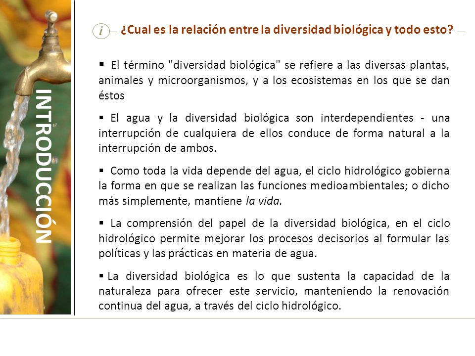 i ¿Cual es la relación entre la diversidad biológica y todo esto? El término