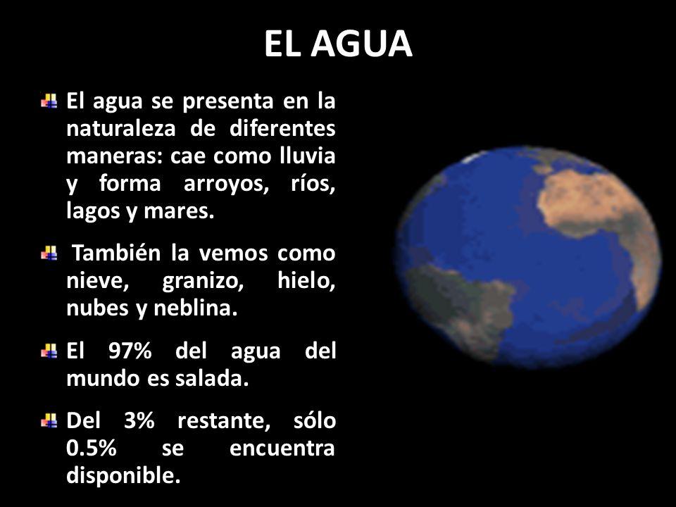 EL AGUA Sin agua no hay vida. Por lo tanto, se hace necesario que tú, yo y todos tomemos conciencia de lo importante que es utilizarla eficientemente