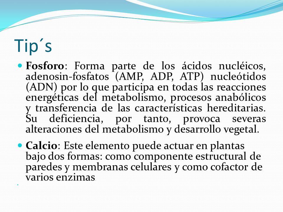 Tip´s Fosforo: Forma parte de los ácidos nucléicos, adenosin-fosfatos (AMP, ADP, ATP) nucleótidos (ADN) por lo que participa en todas las reacciones energéticas del metabolismo, procesos anabólicos y transferencia de las características hereditarias.