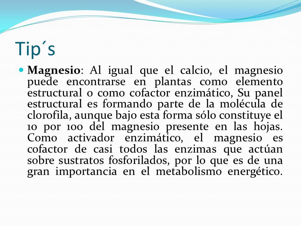Tip´s Magnesio: Al igual que el calcio, el magnesio puede encontrarse en plantas como elemento estructural o como cofactor enzimático, Su panel estructural es formando parte de la molécula de clorofila, aunque bajo esta forma sólo constituye el 10 por 100 del magnesio presente en las hojas.