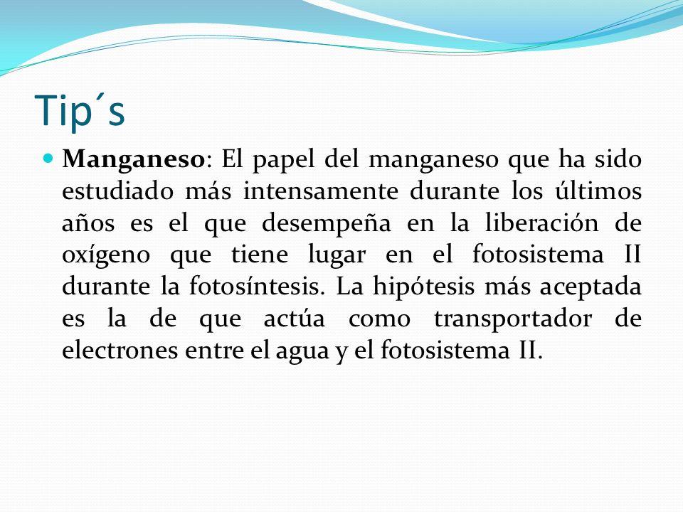 Tip´s Manganeso: El papel del manganeso que ha sido estudiado más intensamente durante los últimos años es el que desempeña en la liberación de oxígeno que tiene lugar en el fotosistema II durante la fotosíntesis.