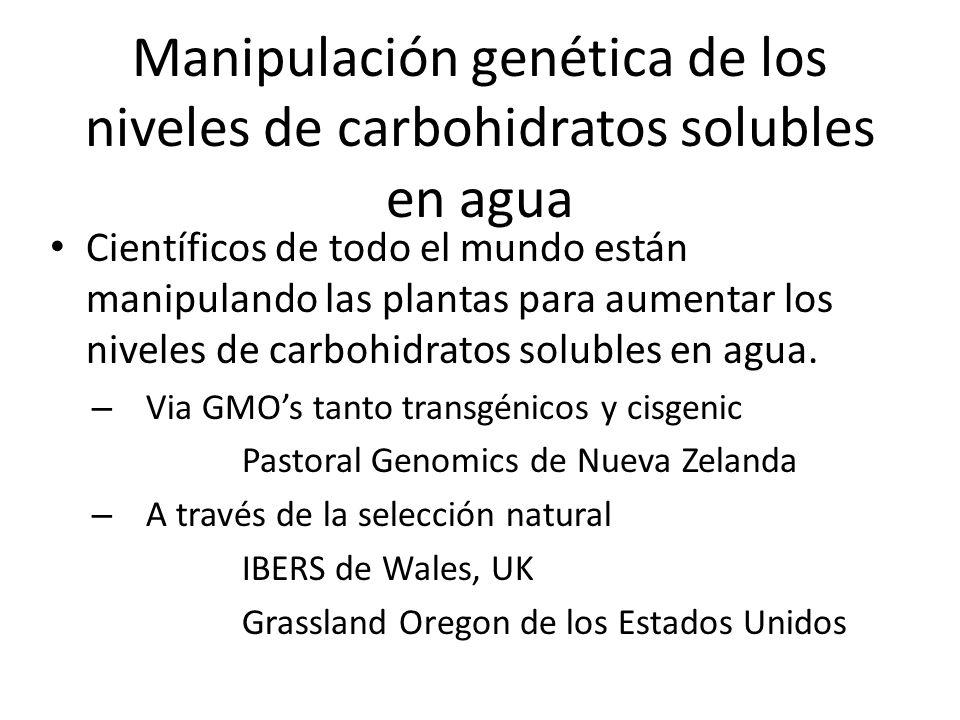 Manipulación genética de los niveles de carbohidratos solubles en agua Científicos de todo el mundo están manipulando las plantas para aumentar los niveles de carbohidratos solubles en agua.