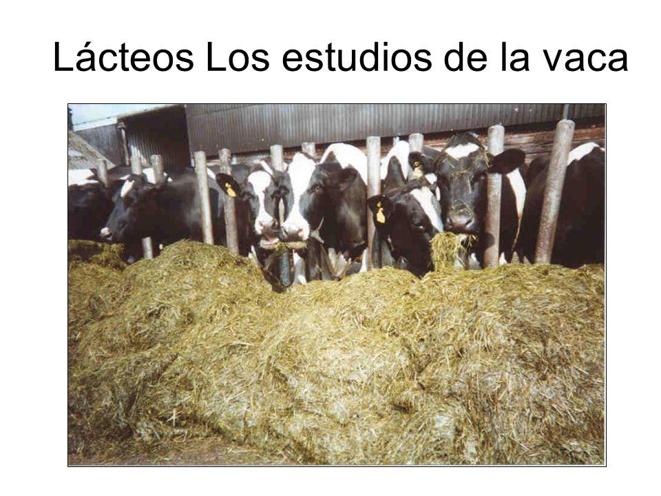Lácteos Los estudios de la vaca