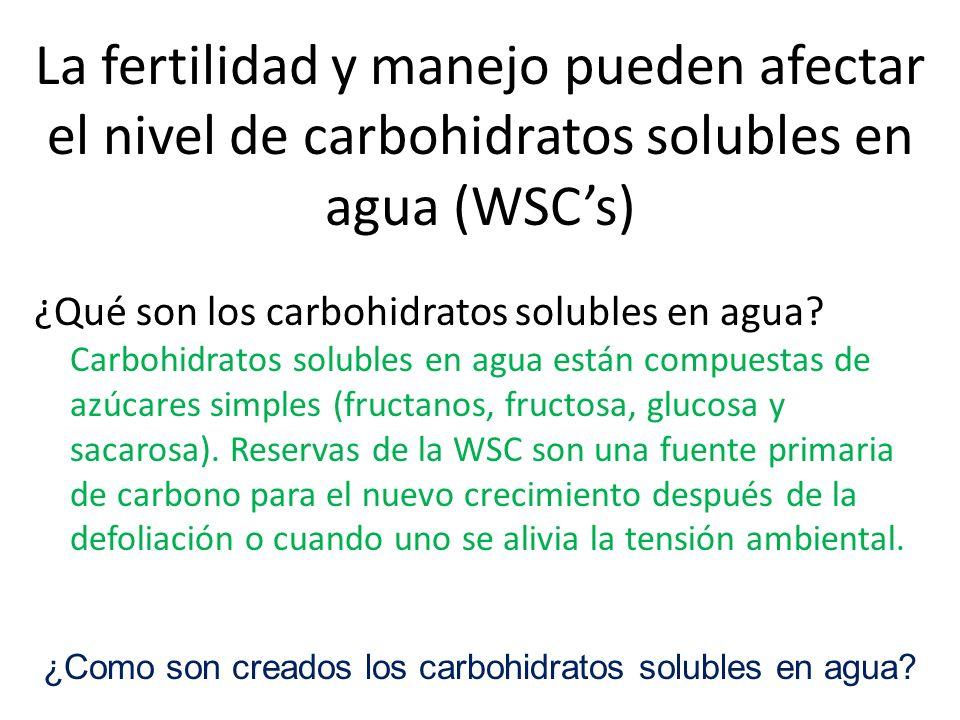 La fertilidad y manejo pueden afectar el nivel de carbohidratos solubles en agua (WSCs) ¿Qué son los carbohidratos solubles en agua.