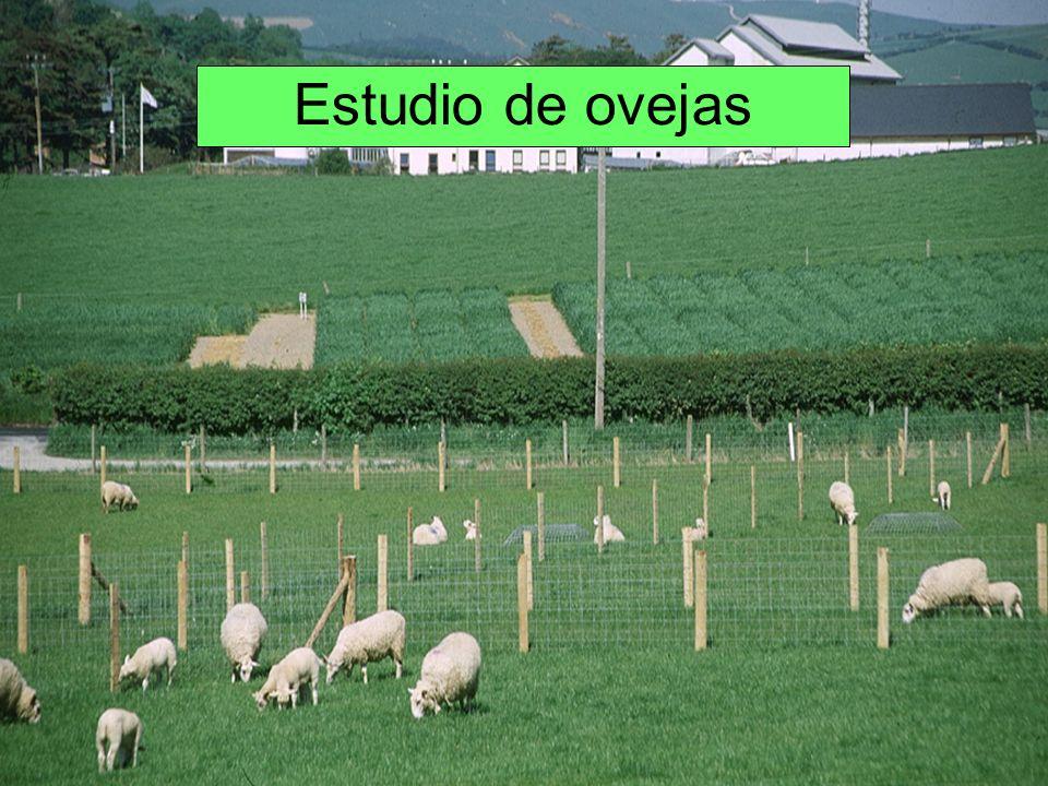 Estudio de ovejas