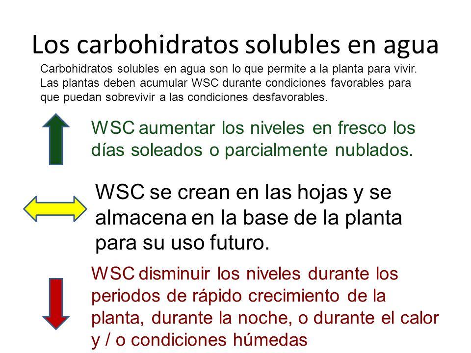 Los carbohidratos solubles en agua Carbohidratos solubles en agua son lo que permite a la planta para vivir.