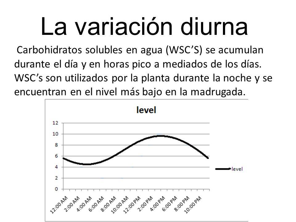 Carbohidratos solubles en agua (WSCS) se acumulan durante el día y en horas pico a mediados de los días.