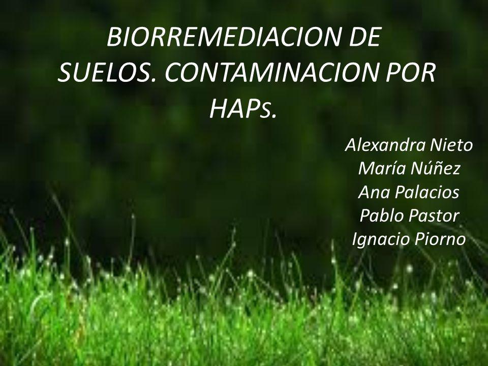 La BIORREMEDIACION es la utilización de microorganismos para descomponer o degradar sustancias contaminantes.