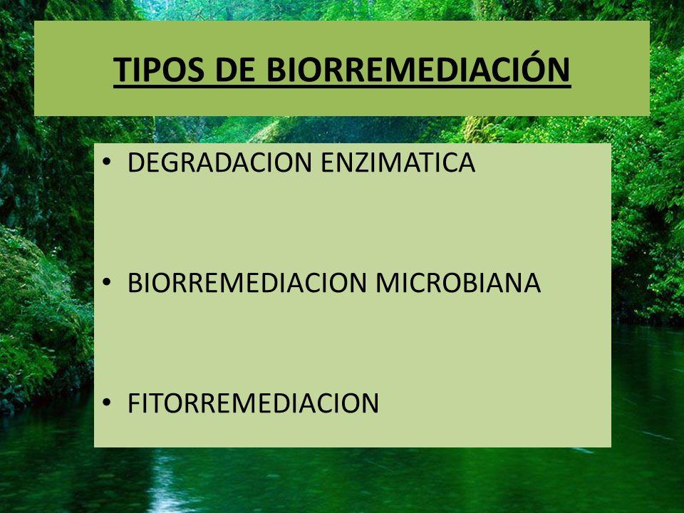 DEGRADACION ENZIMATICA Agregamos enzimas diseñadas con alta especificidad al sitio contaminado degradando las sustancias nocivas.