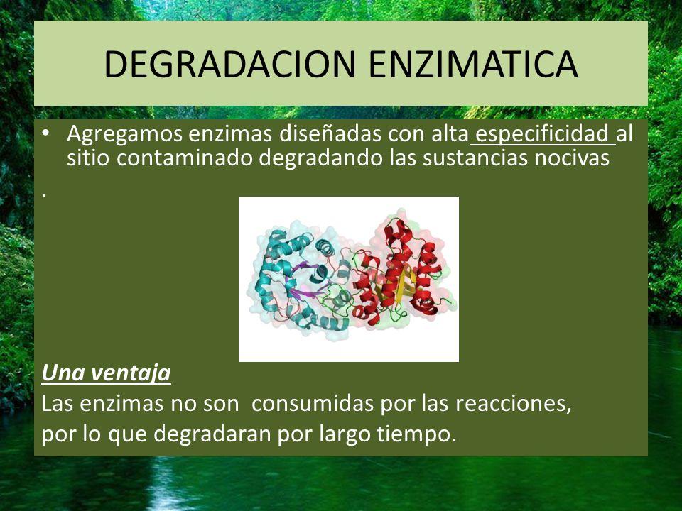 BIORREMEDIACION MICROBIANA En este caso utilizaremos HONGOS en el foco contaminante para descomponer sustancias tóxicas a través del uso de micelios fúngicos que producen enzimas capaces de degradar los componentes contaminantes