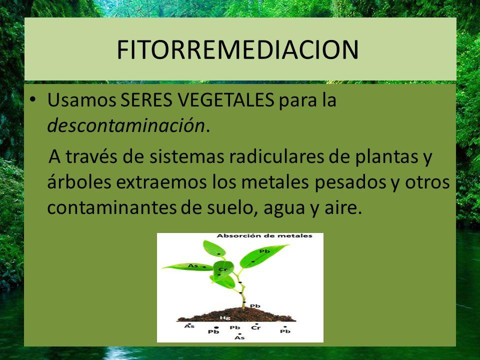 TIPO DE TECNICAS Dependiendo del tipo de contaminante puede ser: Aerobio o anaerobio In-situ (en el lugar contaminado) Ex-situ (el suelo se traslada a un laboratorio)