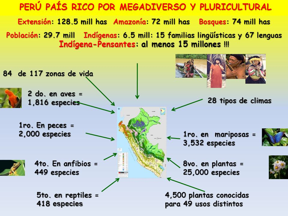 4,500 plantas conocidas para 49 usos distintos 84 de 117 zonas de vida 28 tipos de climas PERÚ PAÍS RICO POR MEGADIVERSO Y PLURICULTURAL 2 do. en aves