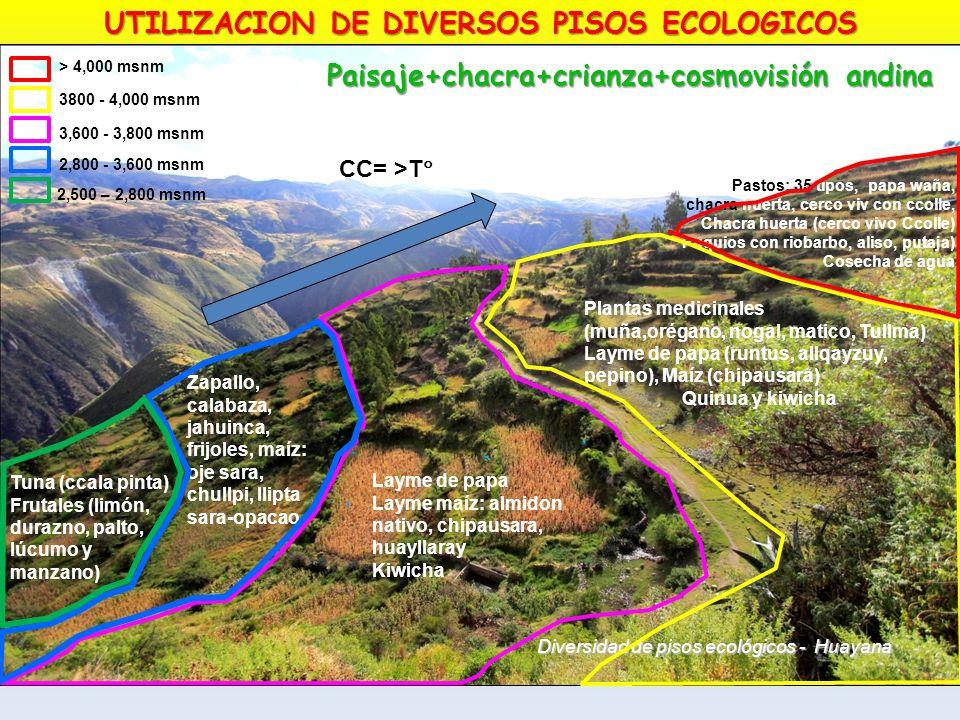 Diversidad de pisos ecológicos - Huayana Pastos: 35 tipos, papa waña, chacra huerta, cerco viv con ccolle, Chacra huerta (cerco vivo Ccolle) Puquios c