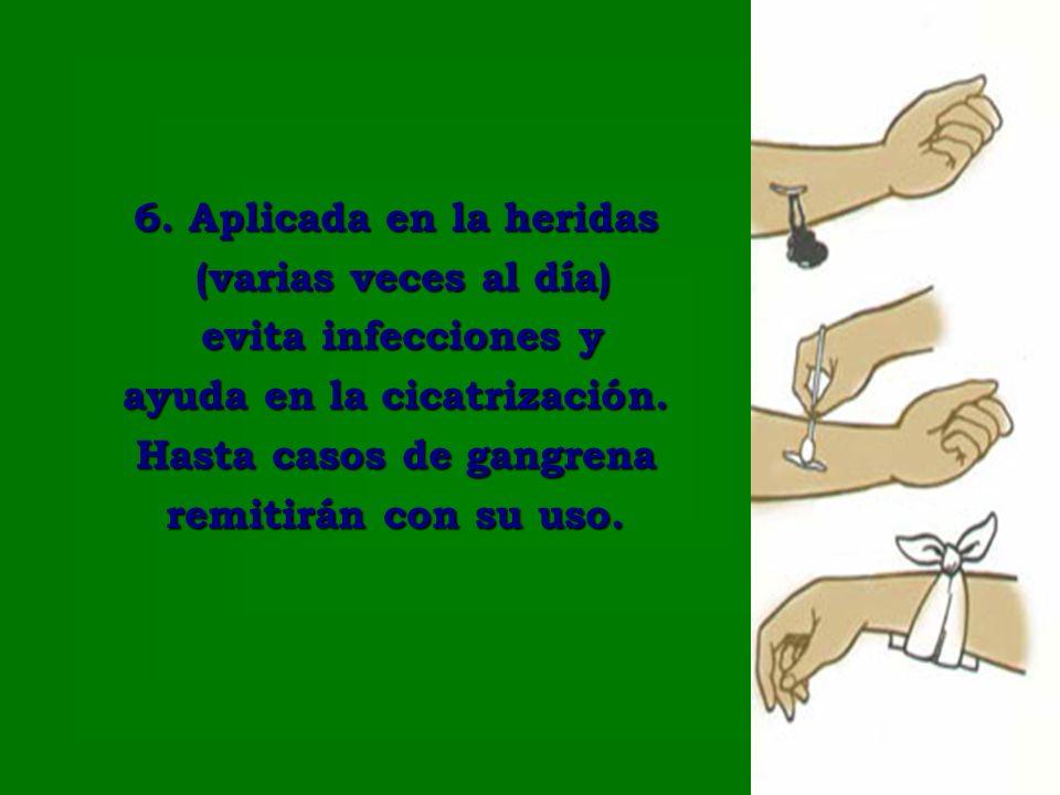 6. Aplicada en la heridas (varias veces al día) (varias veces al día) evita infecciones y evita infecciones y ayuda en la cicatrización. Hasta casos d