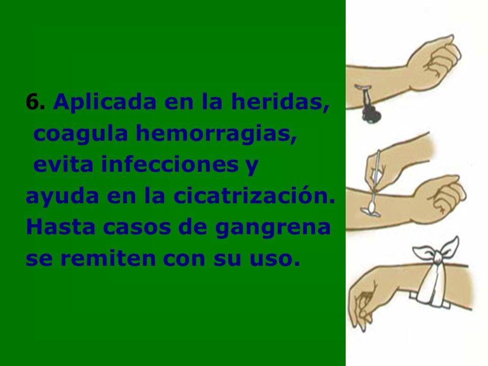 6. Aplicada en la heridas, coagula hemorragias, evita infecciones y ayuda en la cicatrización.