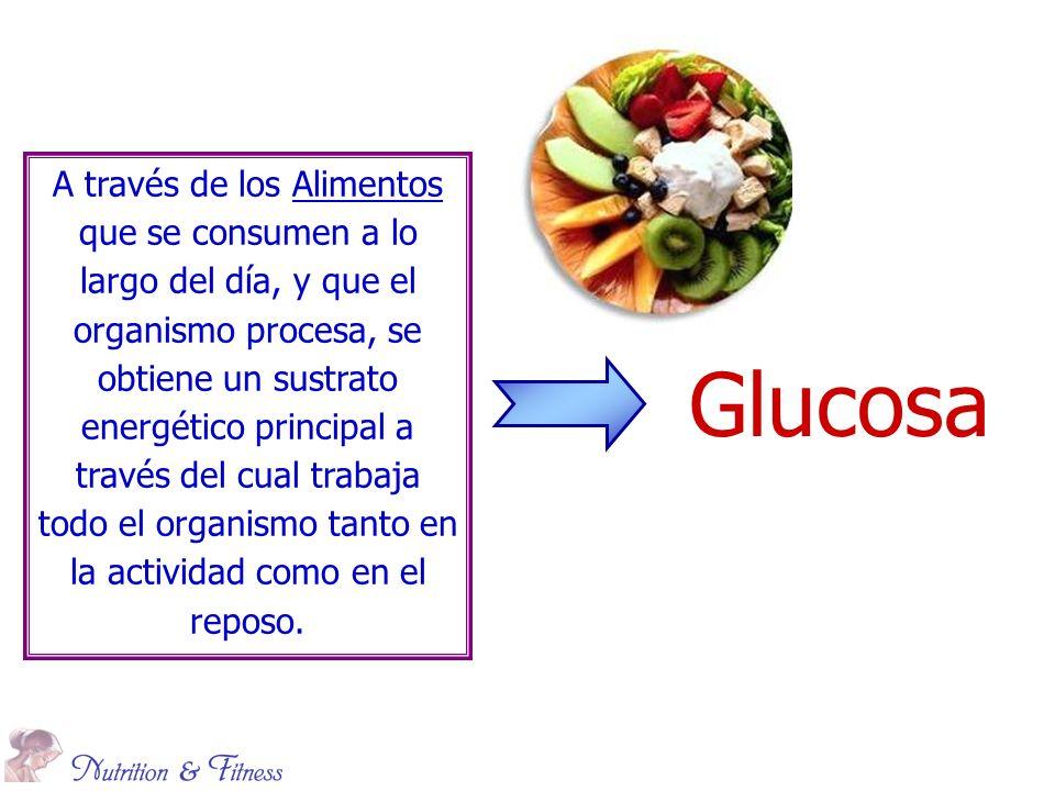 Glucosa A través de los Alimentos que se consumen a lo largo del día, y que el organismo procesa, se obtiene un sustrato energético principal a través del cual trabaja todo el organismo tanto en la actividad como en el reposo.