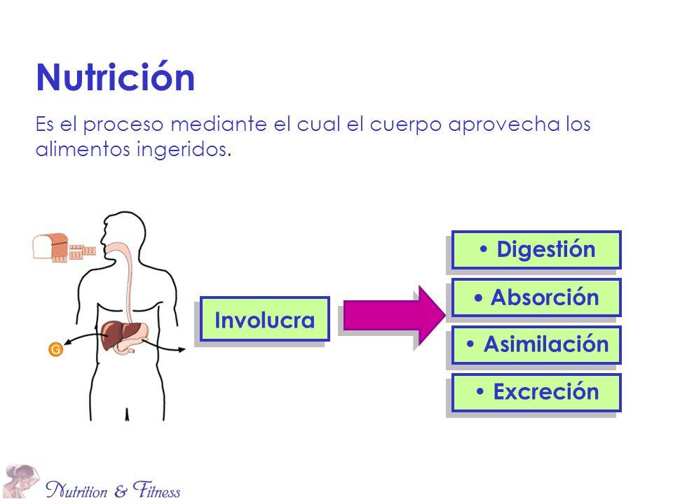 Nutrición Es el proceso mediante el cual el cuerpo aprovecha los alimentos ingeridos. Absorción Asimilación Excreción Involucra Digestión
