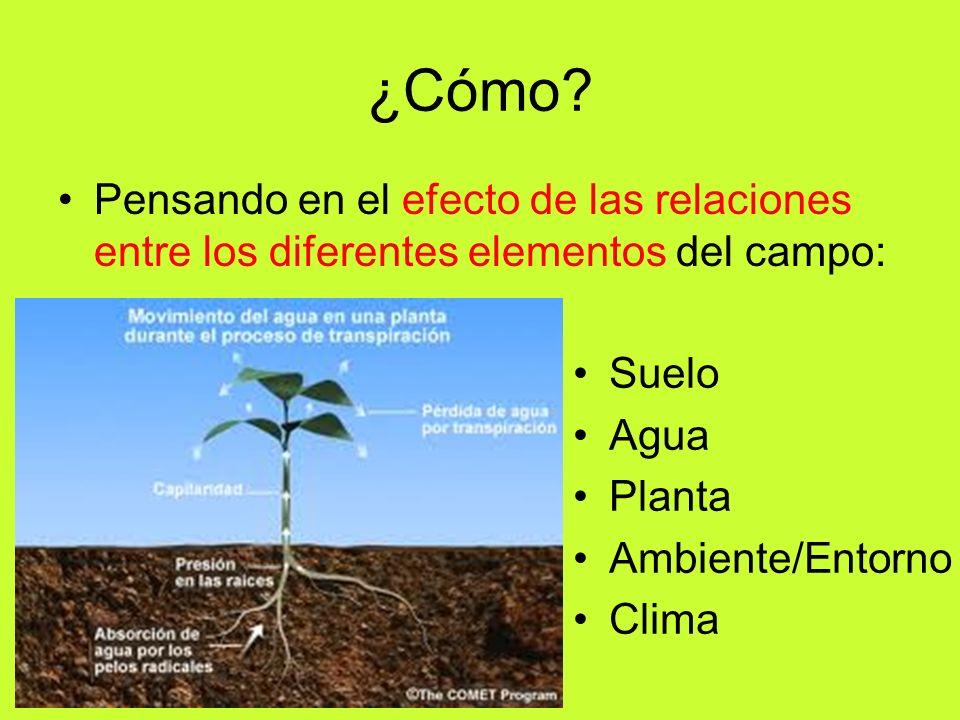 ¿Cómo? Pensando en el efecto de las relaciones entre los diferentes elementos del campo: Suelo Agua Planta Ambiente/Entorno Clima