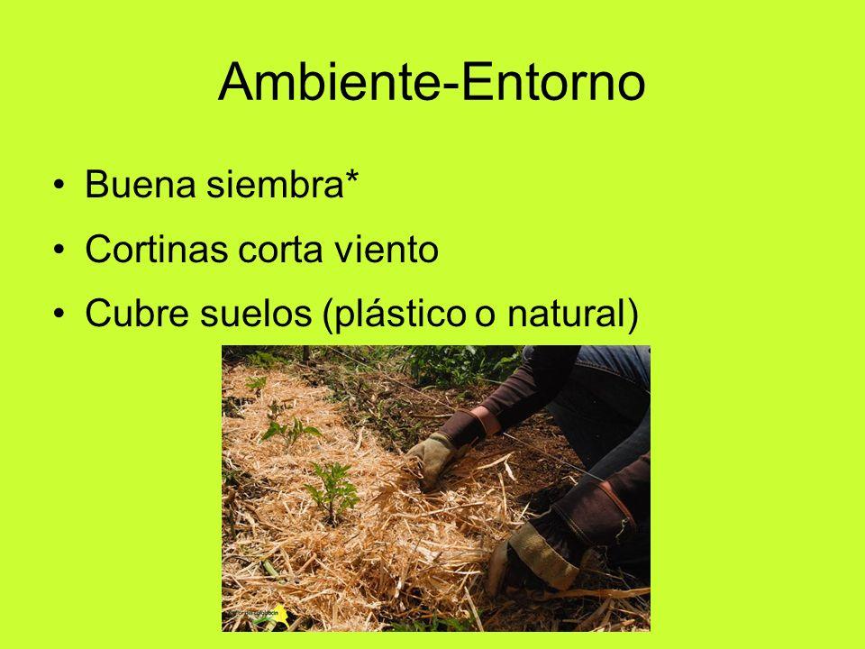 Ambiente-Entorno Buena siembra* Cortinas corta viento Cubre suelos (plástico o natural)