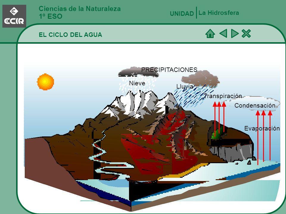 Ciencias de la Naturaleza 1º ESO La Hidrosfera UNIDAD EL CICLO DEL AGUA Aguas subterráneas Las aguas subterráneas constituyen el 14% del agua dulce del mundo, mientras que ríos y lagos solamente constituyen el 0,8% del agua dulce.