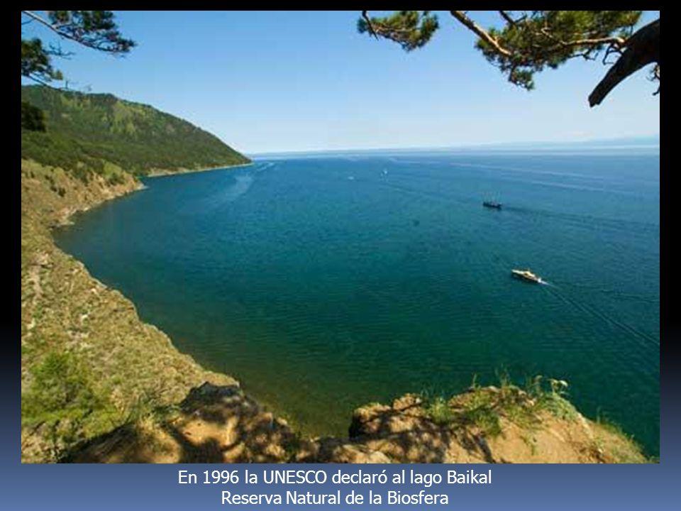 En 1996 la UNESCO declaró al lago Baikal Reserva Natural de la Biosfera