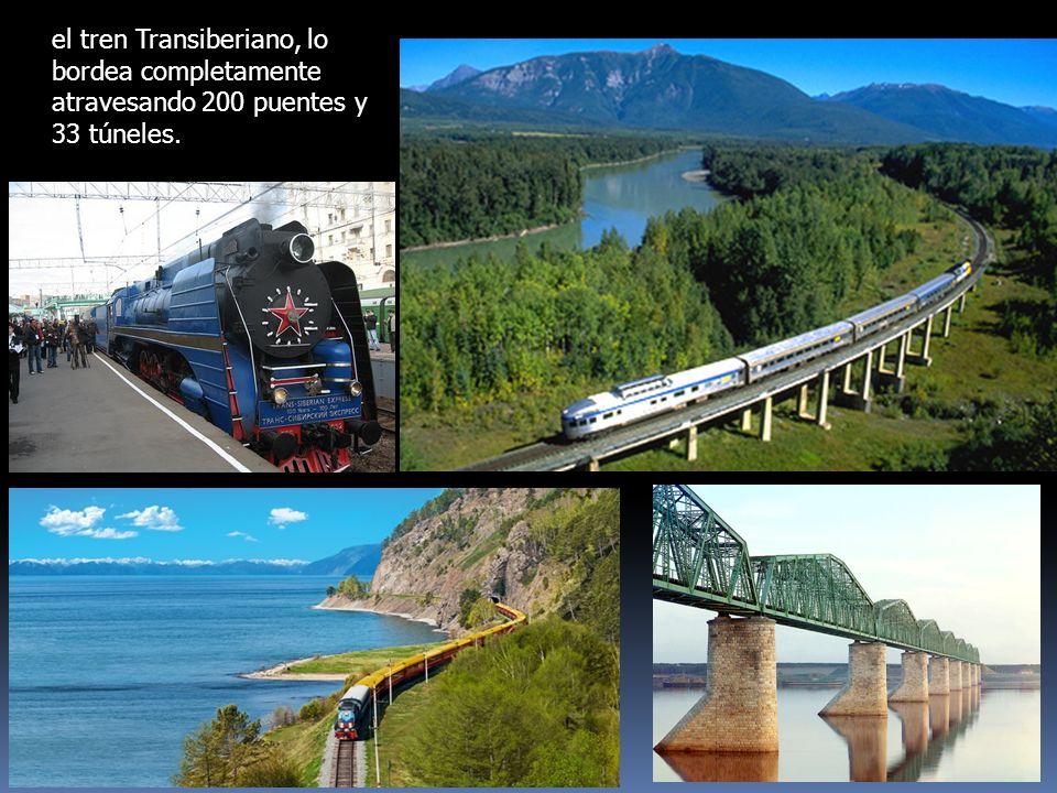 el tren Transiberiano, lo bordea completamente atravesando 200 puentes y 33 túneles.