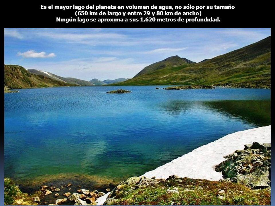 Es el mayor lago del planeta en volumen de agua, no sólo por su tamaño (650 km de largo y entre 29 y 80 km de ancho) Ningún lago se aproxima a sus 1,6