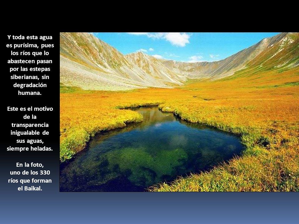 Y toda esta agua es purísima, pues los ríos que lo abastecen pasan por las estepas siberianas, sin degradación humana. Este es el motivo de la transpa
